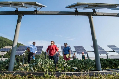 How Solar Energy Can Coincide With Crop and Animal Agriculture