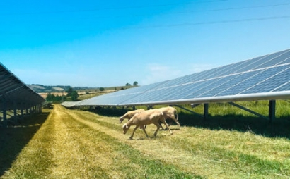 Four Boralex Solar Projects Totaling 180 MW Are Selected in New York State