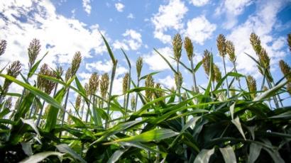 Senators Reintroduce Bill to Recognize Environmental Benefit of Biofuels