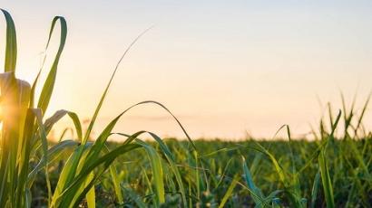Biotech Breakthrough Turns Waste Biomass into Biofuel