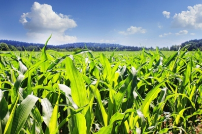 China Will Reportedly Triple Ethanol Production by 2020