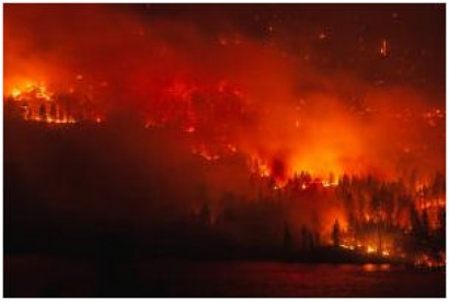 SAF Project in Northwest Could Help in Preventing Wildfires
