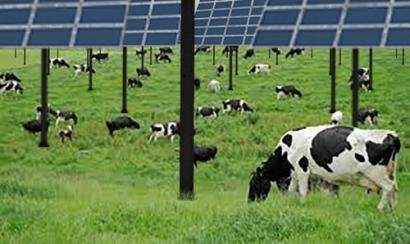 STracker's Elevated PV Brings Community Solar to Ashland
