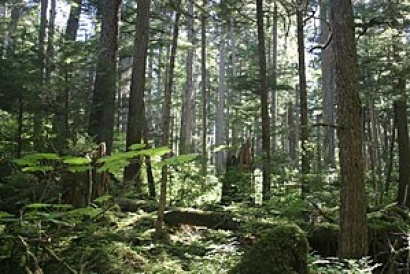 Court Rules to Continue Protection for 50 Million Acres of Forest