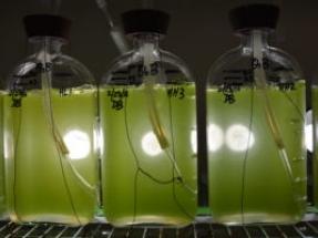 DOE Offering up to $78 Million for Bioenergy R&D