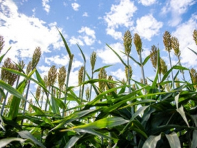 DOE Invests $35 Million to Reduce Carbon Footprint of Biofuel Production