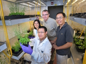 Scientists Increase Oil Content in Leaves to Make Biofuels