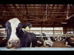 Brightmark Energy Invests in Upstate New York Dairy Biogas Project
