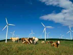 The 2020 WoREA Renewable Energy Business Survey