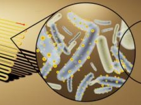 Cyborg Bacteria Able to Convert Sunlight into Useful Chemicals