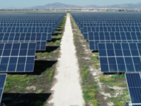 Endesa Begins Agrivoltaic Projects in Four PV Plants