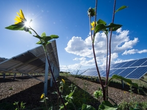 Alternus Energy Closes Acquisition of 11.75 MW Solar Park