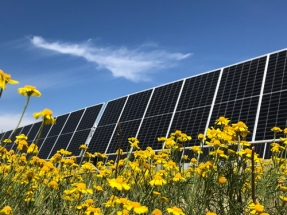 Nestlé Invests in Texas Solar Project