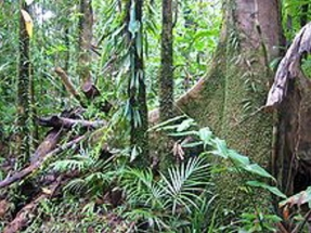 Tropical Forests Huge Source of Carbon Emissions