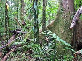 Tropical Forests Huge Source of Carbon Emissions
