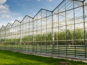 Wastewater at the Heart of Multi-Billion Pound Plan to Decarbonize British Horticulture