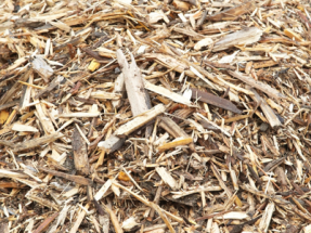 Canada Investing in Waste Biomass Facility