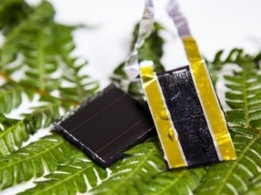 New energy storage design inspired by American fern