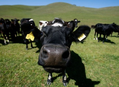 """Biogas sector has become a """"blue-chip value"""" in Europe"""