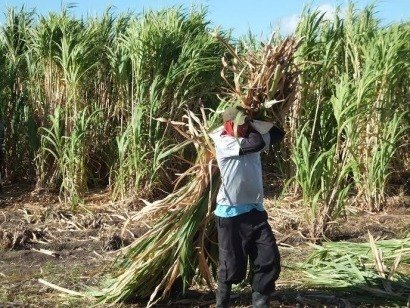 Biomass Viaspace To Partner On Giant King Grass Biomass