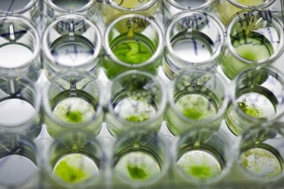 US Department of Energy funds microalgae biomass research