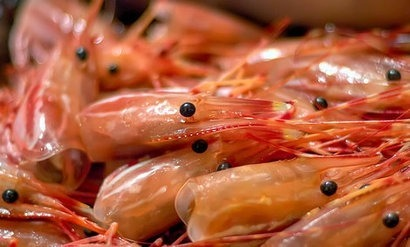 London University researchers create solar cells from shrimps