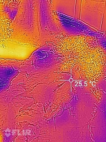 Bristol Zoo Gardens' Reptile House uses thermal imaging to identify heat losses