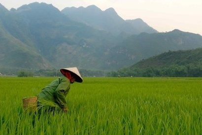 Vietnam has huge potential from biomass and waste says new report