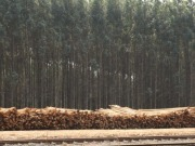 Innovation required if biomass is to meet tough targets