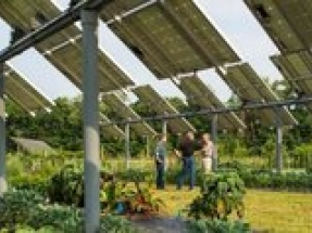 Clean Energy Council publishes Australian Guide to Agrisolar for Large-scale Solar
