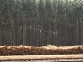 Enviva launches new wood biomass supply tracking system