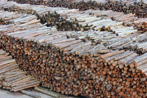 Biomass producer calls for clarity on restrictions concerning infected timber