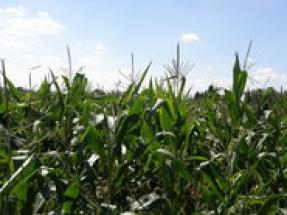 Iowa farmers praise the release of the proposed E15 Rule