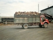 Sarawak Energy adds biomass to its generation mix