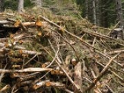 Forest Research and E.ON to lead ETI bioenergy project