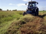 Researchers focus on switchgrass as a renewable fuel source