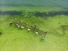 UK company harnesses solar energy to grow 'coral' reef for prevention of coastal erosion
