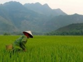 Solargis supports Vietnamese renewables with advanced forecasting for NLDC