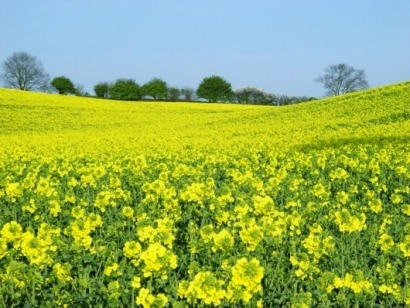 DECC and IEA press need for sustainable biofuels