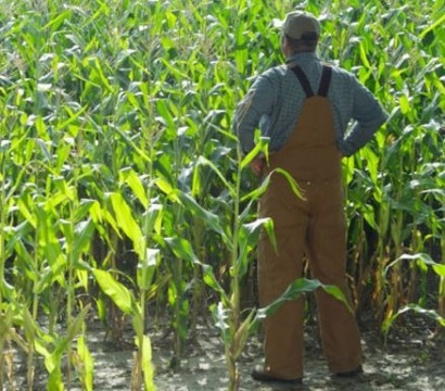 Alliance touts biofuels as COP 2014 gets under way