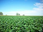 El Departamento de Comercio de Estados Unidos revisa los aranceles al biodiésel