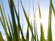 Global sustainability indicators agreed for bioenergy