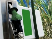 Biofuels in Mexico: the foundations for an unborn industry