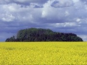 """Biofuel industry """"left high and dry"""" by poor policy-making"""