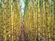 Increased French investment in bioenergy