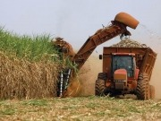 Sweetened or energized: the sugarcane dilemma