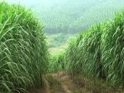 Researchers extol virtues of a bioenergy powered future