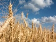 Agencies see crops for biofuels, livestock outpacing food production