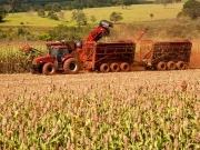 Ceres and Syngenta extend bio-fuel efforts in Brazil