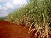 NREL and Colombian oil firm processing sugar cane residue and palm oil into biofuel